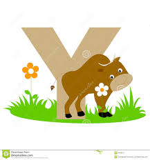 An Animal That Start With Letter Y