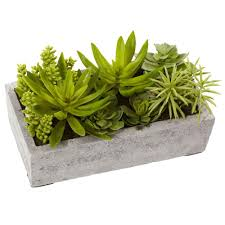 nearly natural succulent garden with concrete planter 4841 the
