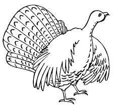 Funny Thanksgiving Coloring Pages 34 Best Turkey Images On Pinterest Wild Turkey Turkey Drawing