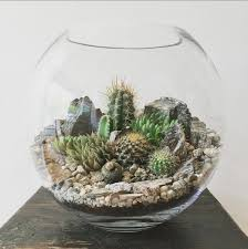 Low Light Succulents by The Bioattic Desert World Terrarium Is A Miniature Landscape Of