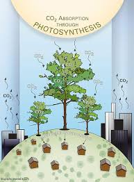 trees carbon storage experts treespirit project