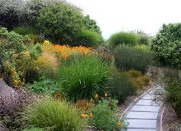 online native plants modern plants for landscaping modern landscape plants
