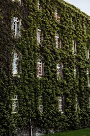 best 25 ivy wall ideas on pinterest ivy wall trellis and