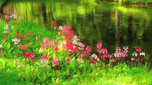 hd images of flowers flowers 53 video background hd 1080p youtube