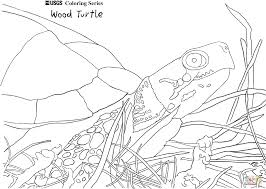wood turtle coloring page free printable coloring pages