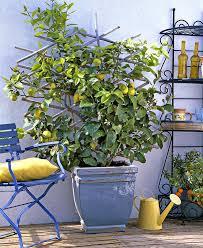 serre jardin d hiver serre adossée bien la choisir bien en profiter détente jardin