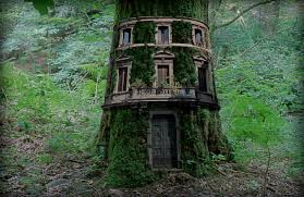 Amazing Treehouses  Inner World Press  Shift in Consciousness
