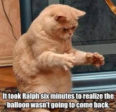 Sad Cat Memes - sad cat can t let go of the bittersweet memories with balloon friend