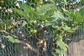 how to choose popular sell fence net trellis bird netting from