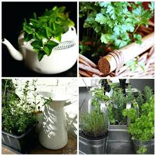 lights to grow herbs indoors growing herbs indoors houseplants growing herbs indoors with grow