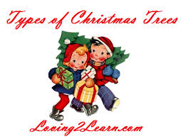 christmas tree facts printable christmas tree facts and learning