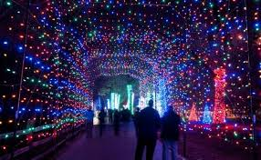 zoo lights at hogle zoo your vote can make wild lights at the detroit zoo the best zoo