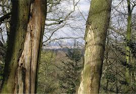 dulwich wood wikipedia
