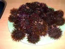 comment cuisiner des oursins oursin définition et recettes de oursin supertoinette
