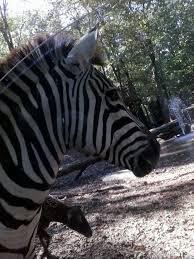 Alabama wildlife tours images 185 best sweet home alabama images sweet home jpg