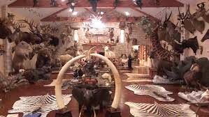 i u0027m not sure how r hunting feels about trophy rooms but this is
