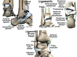 Posterior Inferior Tibiofibular Ligament Ankle Anatomy And Associated Injuries Conditions Ppt Download