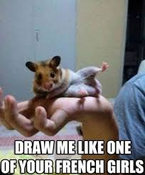 Rodent Meme - animal memes to help jump start your day crave online
