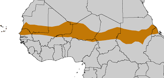 Africa On Map by West Africa Tracing African Roots