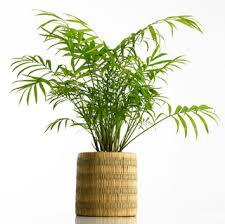 best plant for office best plants for a healthy office