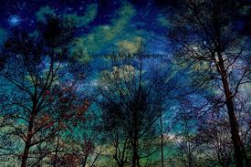 magical forest celestial night sky nature photography fine