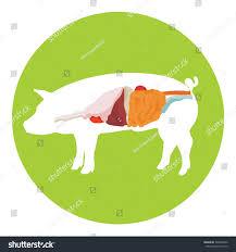 anatomy of pig choice image human anatomy learning