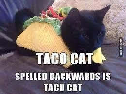 Cat Pictures Meme - taco cat meme