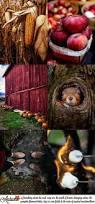 Pumpkin Patch Louisburg Nc by 169 Best Fall Bucket List Inspiration Images On Pinterest Fall