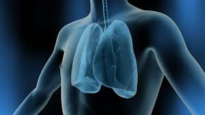 Male Anatomy Video Male Anatomy Lungs Positioning In Loop Stock Footage Video 3705518