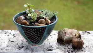 Indoor Container Gardening - container gardening archives soap deli news