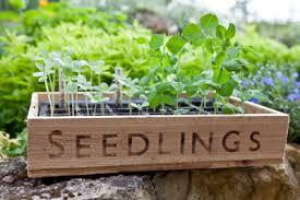 clover u0027s garden centers resource center urban farming