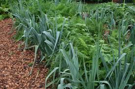 family vegetable garden interplanting increases vegetable garden biodiversity u2013 gardening
