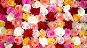 color roses which type of are you playbuzz