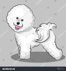 bichon frise cartoon white bichon frise dog one color stock vector 593774507 shutterstock