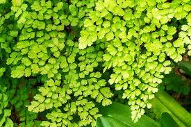 air purification via plants and trees wur