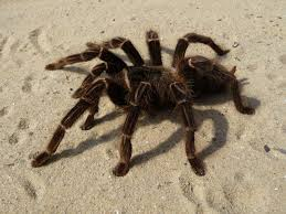 what u0027s in my basement get ready for spider season earthkind