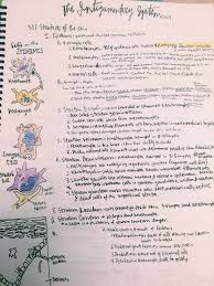 Human Anatomy Integumentary System Integumentary System Notes And Epidermis Cells Anatomy And