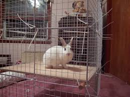 Diy Indoor Rabbit Hutch 10 Diy Rabbit Cages And Hutches For Your Fluffy Friends Shelterness