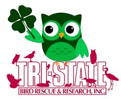 biddingowl tri state bird rescue u0026 research auction