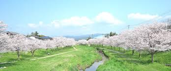 spring season time for a new love u0026 cherry blossom baths