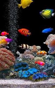 243 best pets aquatic images on fish tanks aquarium