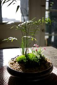 Indoor Plant Arrangements 359 Best Indoor Plants U0026 Arrangements Images On Pinterest Plants