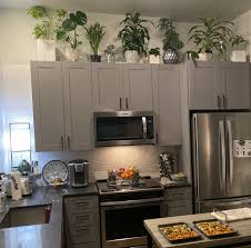 plants for on top of kitchen cabinets plants on top of kitchen cabinet page 1 line 17qq