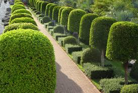 Topiary Plants Online - 53 stunning topiary trees gardens plants and other shapes