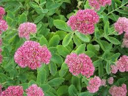 Phlox Flower Phlox Planting Growing And Caring For Phlox The Old Farmer U0027s
