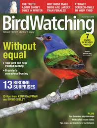 Backyard Birding Magazine New Birdwatching Magazine Answers Questions About Painted Bunting