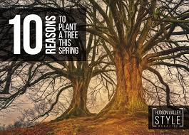 10 reasons to plant a tree this hudson valley style magazine