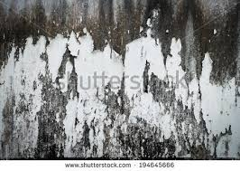 old cement wall black mold paint stock photo 194645666 shutterstock