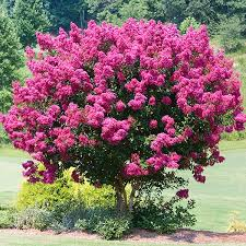 pink flower tree flowering trees small ornamental trees for your area