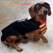 Halloween Costumes Wiener Dogs Harry Potter Costume Dachshund Lol Robin Patterson
